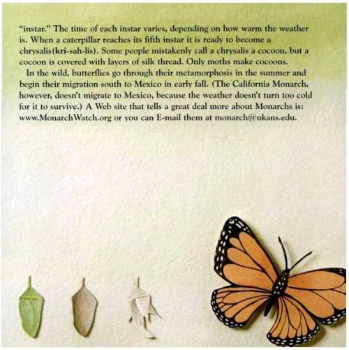 "From ""Becoming Butterflies"""