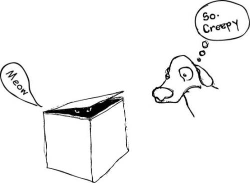 Andrea's dog, and its reaction to cats in boxes